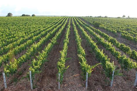 casa vinicola casa vinicola coppi