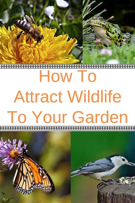 how to attract wildlife to your backyard wildlife gardening how to attract wildlife to your garden