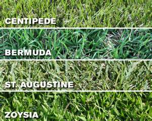 which grass type should i use on my ta fl lawn