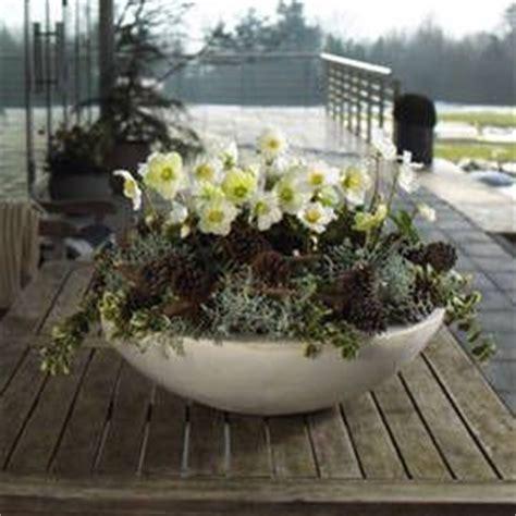 Pflanzen Für Den Garten 21 by 21 Besten Garten Bilder Auf Verandas Balkon