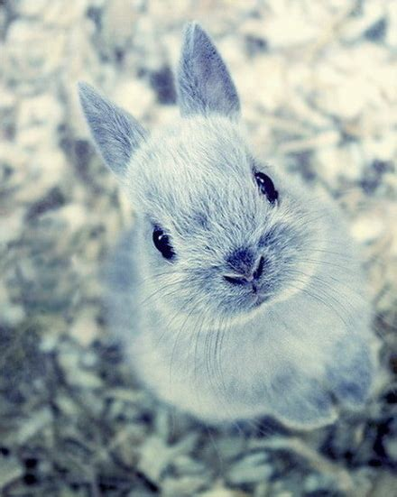 Gantungan Bunny Kopenhagen Bunny 1 snow rabbit on