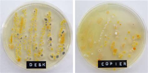 fotocopiatrice da ufficio batteri germi e virus in ufficio office bacteria project