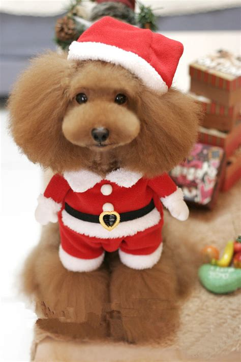 merry puppy merry pet cat puppy bid clothes and pictures litle pups