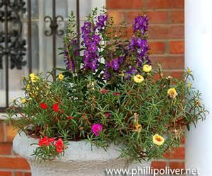 Fall Blooming Perennials Portulaca A Southern Garden