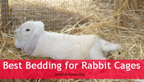 best bedding for rabbit cages rabbit hutches