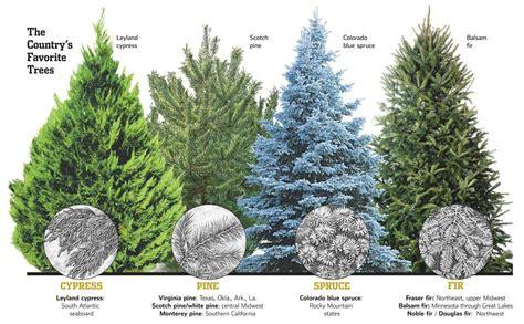 fraser fir artificial christmas trees