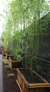Wire Mesh Trellis Need Privacy Diy Garden Privacy Ideas The Garden Glove