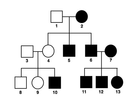 inheritance pattern pedigree quiz image gallery pedigree practice