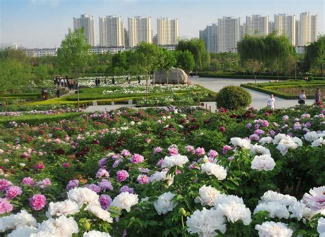 Garden China by Where To See Peony Flower During The Peony Culture