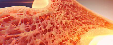 Cross Section Of A Bone by Quot Bone Cross Section Quot For Radius Digital Science On Behance