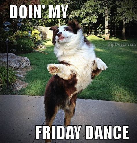 Funny Tgif Memes - dog meme friday dance tgif dogs pinterest friday