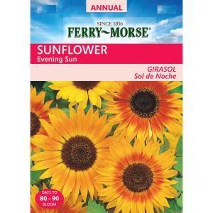 ferry morse sunflower evening sun seed 1501 the home depot