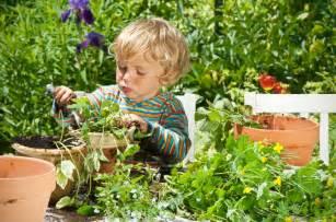 Growing Corn In Backyard Kids Terra Gardens