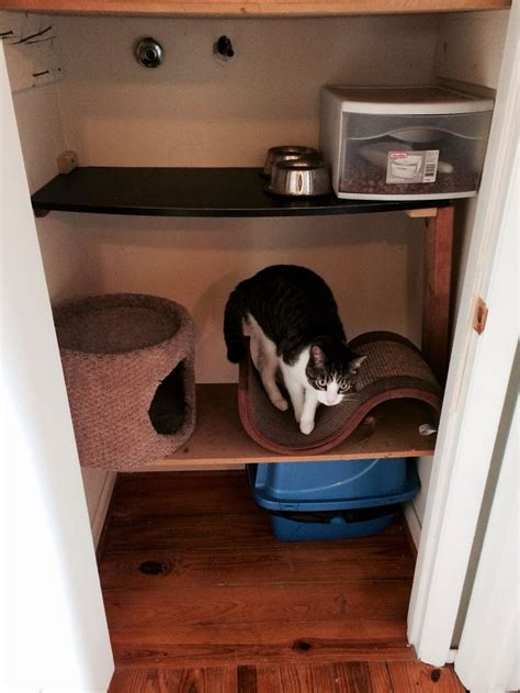 Cats Closet by 55 Best Images About Cat Closet On Custom
