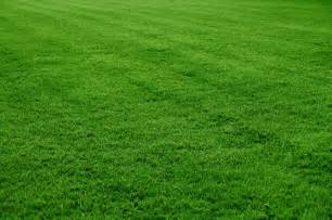 will scattering ashes on my lawn harm the grass
