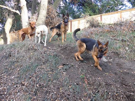 ranch dogs c oc ranch