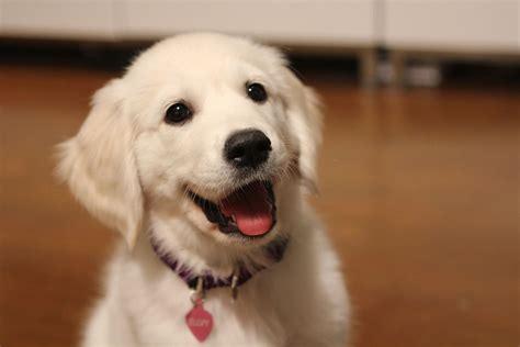 puppies smiling smiling puppy puppysmiles