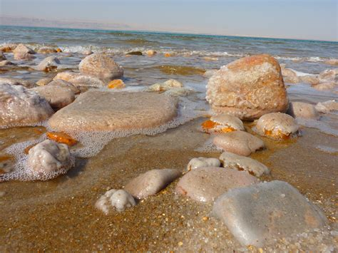 Batu Kerang Laut gambar pantai pasir batu lautan perjalanan