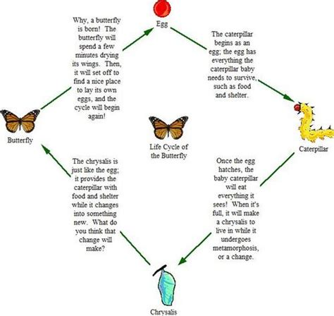 emotional butterfly the metamorphosis and the lessons learned books cycle of the butterfly