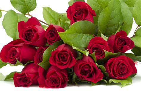 imagenes rosas para el dia de la madre banco de im 193 genes 161 feliz d 237 a de las madres im 225 genes de