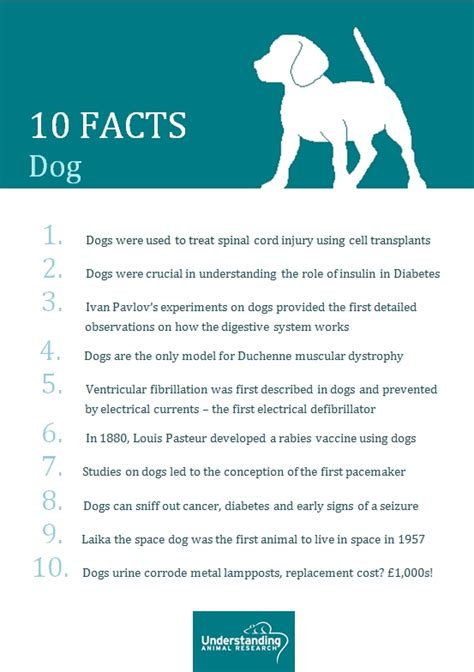 10 Facts About Dogs by Understanding Animal Research Understanding Animal