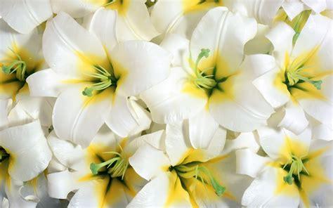 imagenes flores impresionantes rodeado de flores impresionantes fondos de escritorio 3