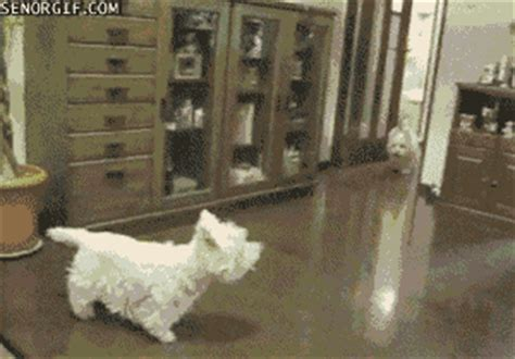 Dog Crash GIF by Cheezburger - Find & Share on GIPHY