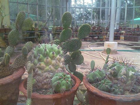 Garden Coimbatore Tnau Botanical Garden Coimbatore Destination Infinity