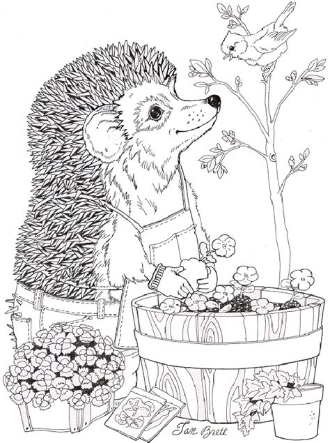 omg jan brett coloring pages fun hedgehogs to sew