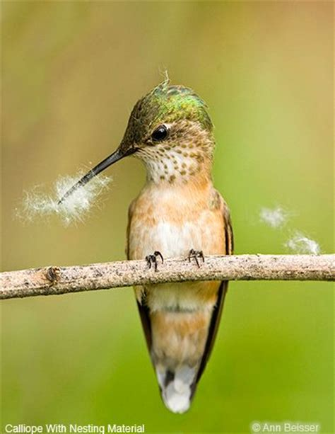 1274 best images about hummingbirds on pinterest