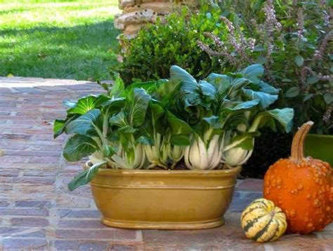 vegetable garden in pots home vegetable garden in pots www pixshark images
