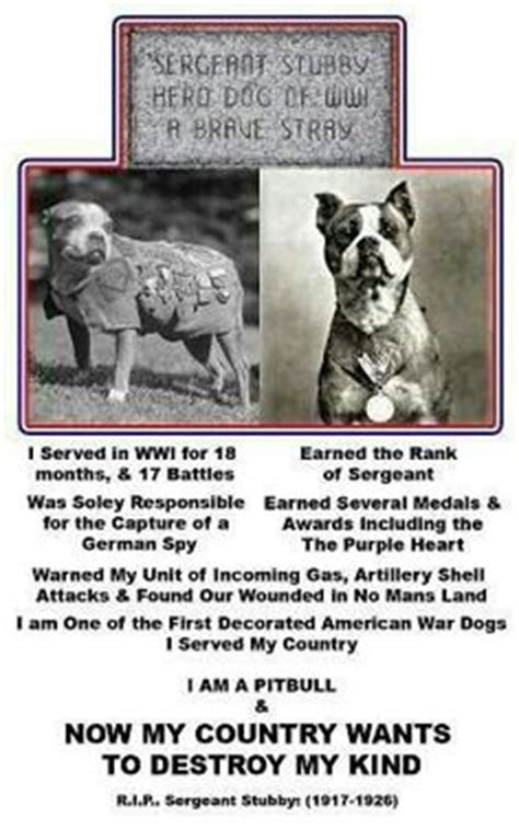 Sgt Stubby Breed Bsl Is Crap On Therapy Dogs Magazine And Nanny