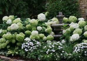 garten hortensie annabelle hydrangea the graceful gardener