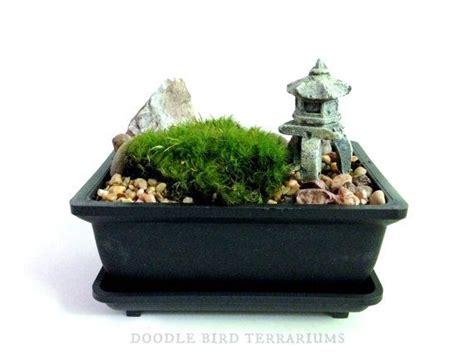 indoor moss garden kit 24 best images about mini jardin zen on
