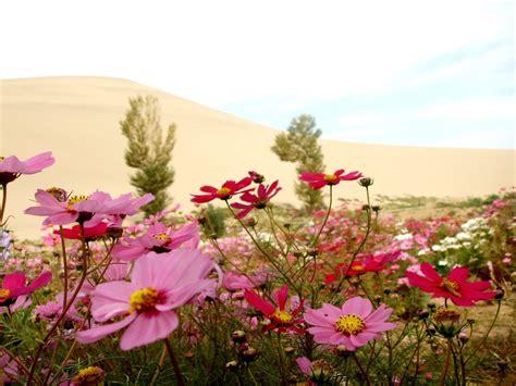 imagenes de paisajes florales paisajes de flores flores paisajes de flores tulipanes