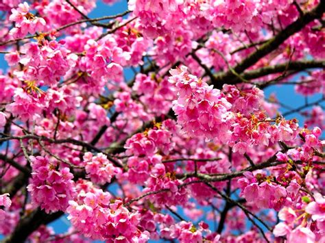 gambar wallpaper bunga bergerak gudang wallpaper