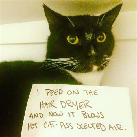 cheezburger cat shaming funny internet cats