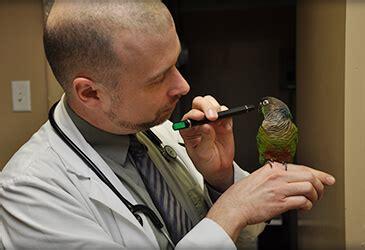 veterinary care  pet birds