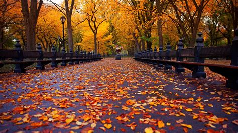 wallpaper  york autumn park walk road bench yellow