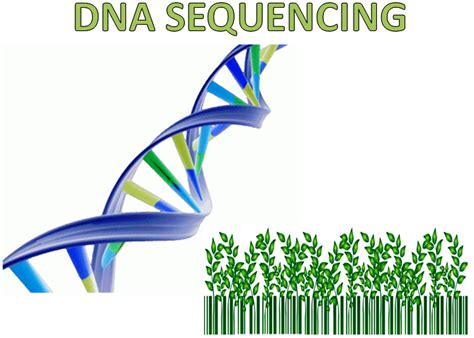 illumina sequence dna sequencing sanger sequencing illumina sequencing