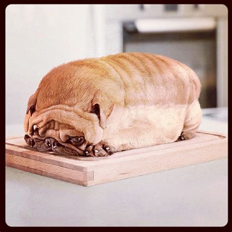 pug loaf omfg what pug loaf bread food omg adorabl flickr