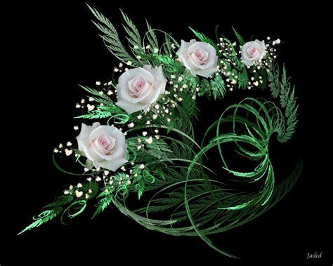 imagenes de rosas blancas bonitas rosas blancas fotos bonitas imagenes bonitas frases