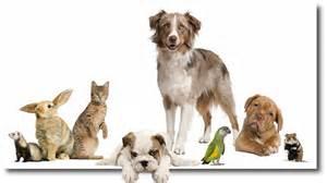 haus tiere viele christen machen sich sorgen um ihre haustiere