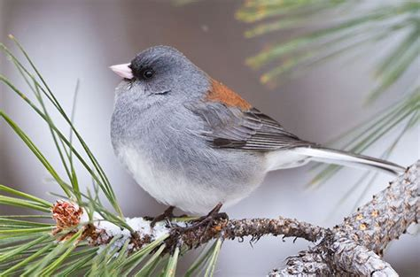 backyard bird photography the ultimate guide to backyard bird photography birds and blooms