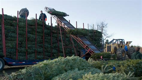 awesome picture of christmas tree farm supplies perfect