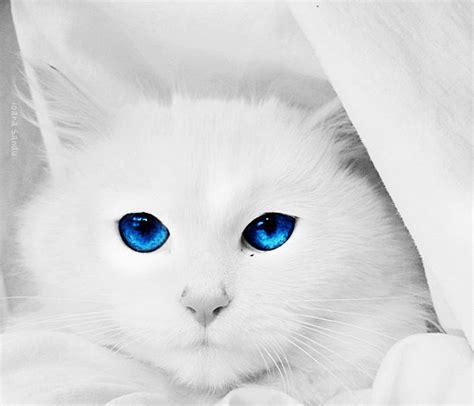 Bibit Eye Cat White hypnotic cat by ioasan on deviantart