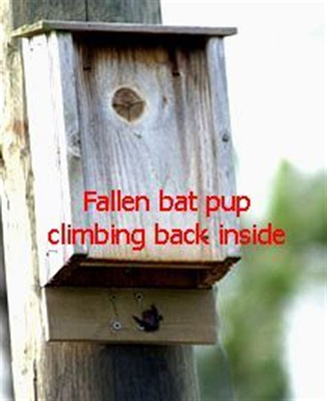 Gardeners Supply Bat House Bat House Plans Tips For Building A Bat House And