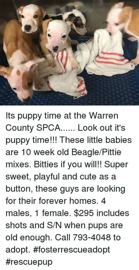 Its Out There For A Pup From The You Are A Photo Pool by Its Puppy Time At The Warren County Spca Look Out It S