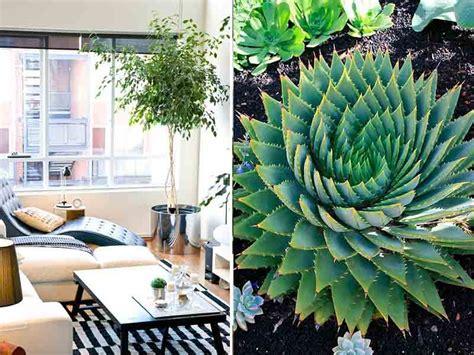 decoracion de interiores con plantas de sombra las mejores plantas para interiores noticias adondevivir