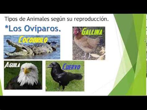imagenes de animales por su alimentacion los tipos de animales por su alimentacion y por su